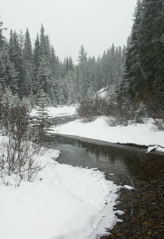 Pocaterra Creek on a snowy day